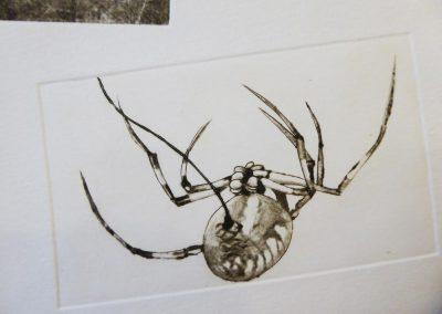 Agnès  DONEY, gravure araignée