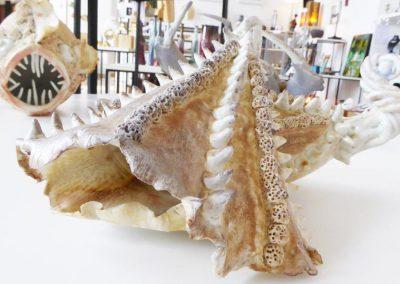 Poisson en prcelaine créé par Sylvie ERHART, Les Ateliers de Moussanas, Céramiste